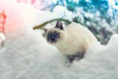 Katze, die auf einem schneebedeckten Baum sitzt Stockbild
