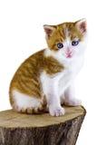 Katze, die auf einem Stück Holz sitzt Lizenzfreies Stockfoto
