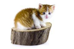Katze, die auf einem Stück Holz sitzt Lizenzfreie Stockbilder
