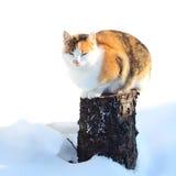 Katze, die auf einem Stumpf mit Schnee sitzt Stockbild