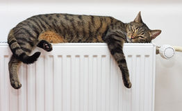 Katze, die auf einem warmen Heizkörper sich entspannt Lizenzfreies Stockfoto