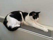 Katze, die auf einem warmen Heizkörper sich entspannt Stockbilder