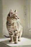 Katze, die auf einem weißen Fensterbrett sitzt Lizenzfreies Stockfoto