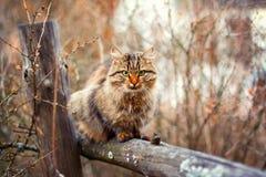 Katze, die auf einem Zaun stationiert Stockfotografie