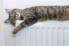 Katze, die auf einen Heizkörper oben schaut liegt Stockfoto