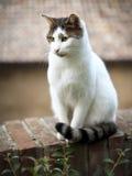 Katze, die auf einer Backsteinmauer, Italien sitzt Lizenzfreie Stockfotografie