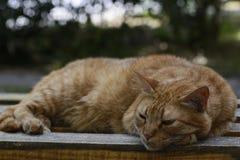 Katze, die auf einer Bank sitzt Lizenzfreies Stockbild