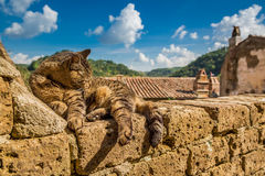 Katze, die auf einer Steinwand liegt Lizenzfreies Stockbild