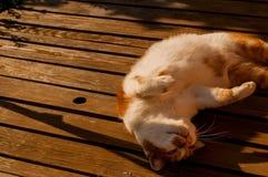 Katze, die auf einer Tabelle schl?ft lizenzfreies stockfoto