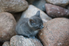 Katze, die auf Felsen sitzt Stockbild