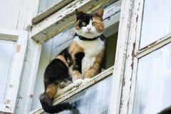 Katze, die auf Fenster sitzt Lizenzfreie Stockbilder
