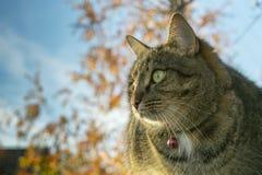 Katze, die auf hölzernen Brettern im Herbst gegen den Himmel sitzt lizenzfreie stockbilder