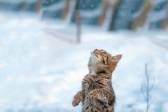 Katze, die auf Hinterfahrwerkbeinen steht Lizenzfreies Stockbild