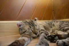 Katze, die auf Holztisch legt stockbilder