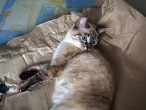 Katze, die auf Papier liegt Stockfotos