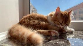 Katze, die auf sitzt stock video footage