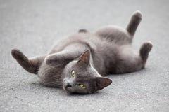 Katze, die auf Straße liegt Lizenzfreies Stockbild