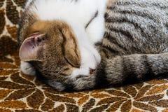 Katze, die auf Stuhl schläft lizenzfreies stockbild