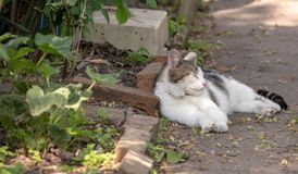 Katze, die auf Weg im Garten schläft Lizenzfreie Stockfotos