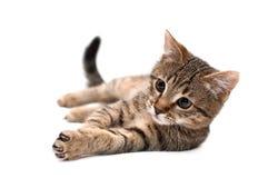 Katze, die auf Weiß liegt Stockfoto
