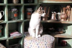 Katze, die auf weißem tabure/taburete sitzt Lizenzfreies Stockbild