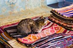 Katze, die auf Wolldecken sitzt stockfoto