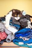Katze, die auf Wäscherei liegt Stockfotografie