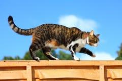 Katze, die auf Zaun geht Stockfotografie