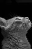 Katze, die aufwärts schaut Stockfoto