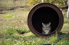 Katze, die aus altem Eisenfaß im Garten heraus sitzt und schaut stockfotos