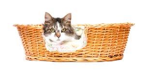 Katze, die aus dem Korb heraus schaut Lizenzfreie Stockbilder