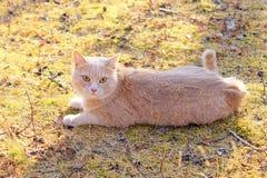 Katze, die aus den Grund liegt Lizenzfreie Stockbilder
