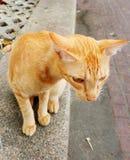 Katze, die aus den Grund sitzt Stockfotografie