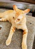 Katze, die aus den Grund sitzt Lizenzfreie Stockfotos