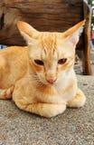 Katze, die aus den Grund sitzt Stockbilder