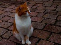 Katze, die aus den Grund sitzt stockbild