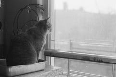 Katze, die aus Fenster heraus schaut Lizenzfreies Stockfoto