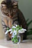 Katze, die Blumen betrachtet Stockbilder