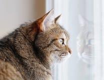 Katze, die das Fenster betrachtet Lizenzfreie Stockfotos