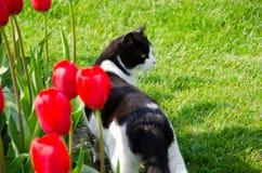 Katze, die in das Gras geht Lizenzfreies Stockfoto