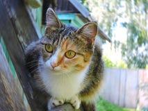 Katze, die den Abstand auf einem wal untersucht Stockfoto
