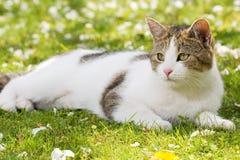 Katze, die in den gras liegt Lizenzfreies Stockfoto