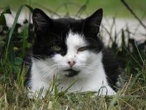 Katze, die in den Rasen legt Lizenzfreies Stockfoto