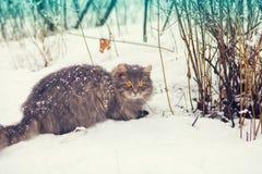 Katze, die in den Schnee geht Lizenzfreie Stockbilder