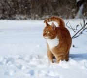 Katze, die in den Schnee geht Lizenzfreie Stockfotos