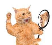 Katze, die den Spiegel untersucht und eine Reflexion eines Löwes sieht Lizenzfreies Stockfoto