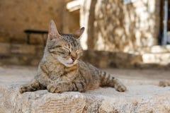 Katze, die in der Sonne in Griechenland sich aalt Lizenzfreie Stockbilder