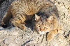 Katze, die in der Sonne schläft Stockfoto
