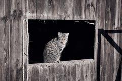 Katze, die in der Sonne sich aalt Stockbilder