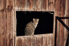 Katze, die in der Sonne sich aalt Stockfotos